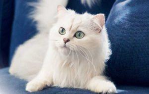 kedi52